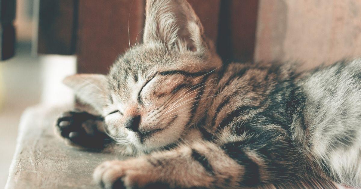 Legătura dintre somn și hidratare